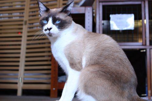 「猫の日」なので都内の猫カフェに行ったらスゴかった!