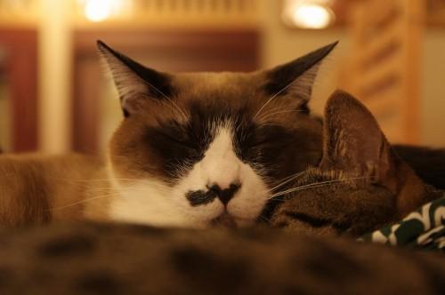 2月22日は猫の日!猫カフェ店員に聞いた「猫にモテない人」