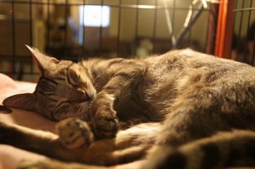 2月22日は猫の日!猫カフェ店員に聞いた「猫にモテる人」