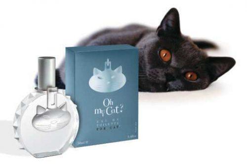 キャット ボトル+箱+黒猫