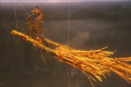 横浜・八景島シーパラダイス 海の生きものたちのハロウィンイベント「アクアリゾーツのハロウィン」