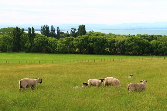 ニュージーランドでしか出来ないこと16選