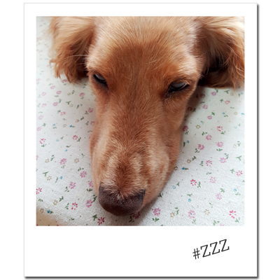 Domani201512_dogcat