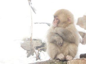 サル,猿,干支