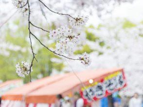 花見・桜・花びら・