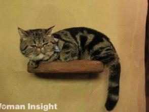 猫カフェ,てまりのおうち,人生はニャンとかなる,エキゾチックショートヘア