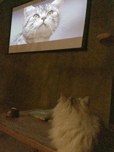 猫も映画を観ます。