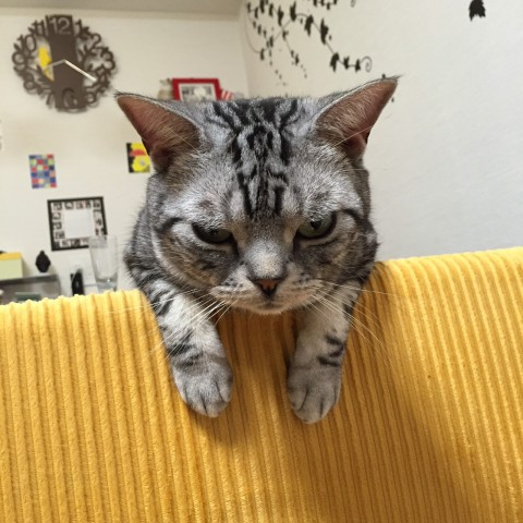 猫の謎,ドアの前で待つ,行動,意味