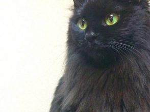 黒猫,謎,ハロウィン,不吉
