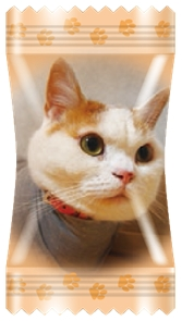 パッケージ,猫,愛猫,チャンス