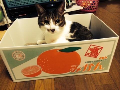 猫,猫の謎,段ボール,袋,じゃれる,理由