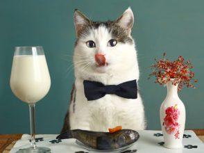 猫,与えてはいけない,危険,食べ物