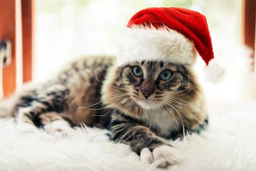クリスマス,猫,ふわふわ,サンタ