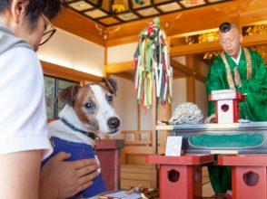 犬,厄年,厄払い,ペット,能蔵院