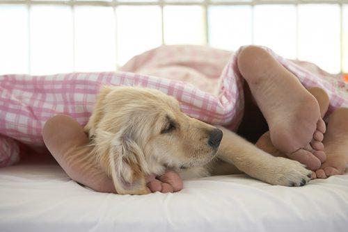 犬,添い寝