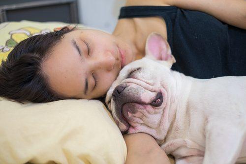 添い寝,犬