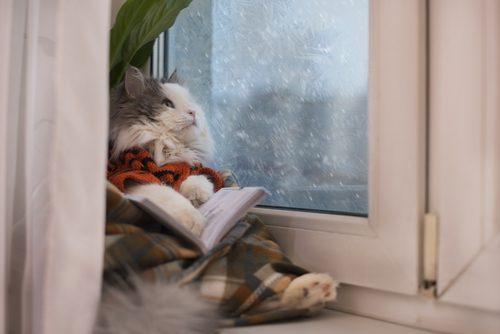 雨の日,憂鬱,楽しく,おうち時間