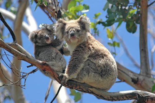 オーストラリア,行ってよかった,海外旅行,旅行先,