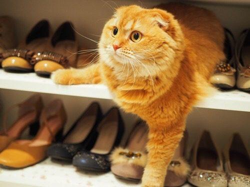 猫,にゃんこ,かわいい,写真