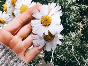 白い花, 手, 草原