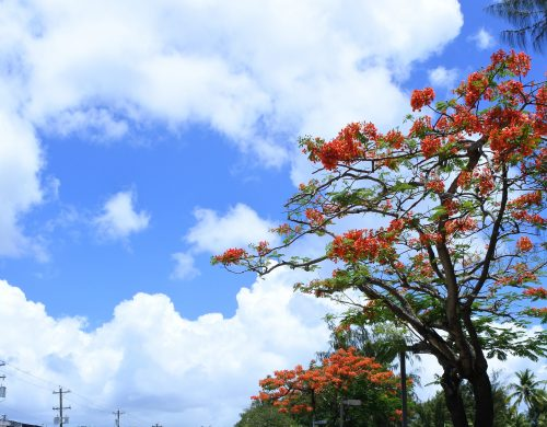 Mariana,Saipan,CanCam