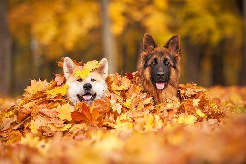 秋バテ,対策,体調不良,季節の変わり目