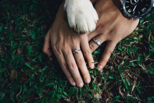 11月22日,いい夫婦の日,ペット,夫婦円満