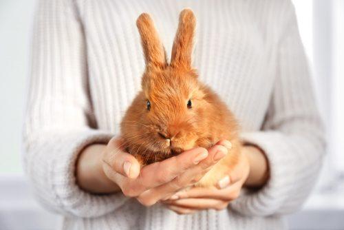 ウサギ,数え方,雑学,クイズ