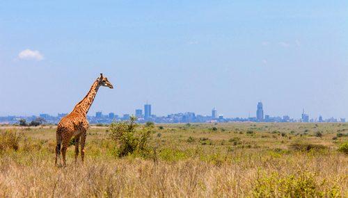 ナイロビ(ケニア)