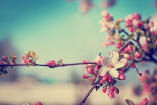 小春日和,意味,雑学,クイズ