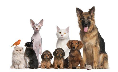 ペット,犬,猫,どっち,結婚相手,調査,男女