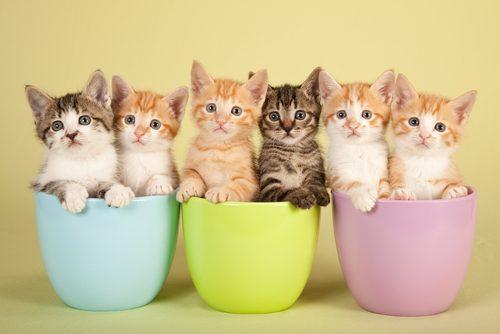 猫,人気,種類,柄,調査,猫の日