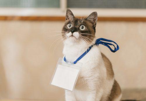 猫,名前,人気,ランキング,調査