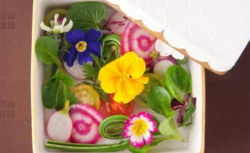La Belle Lune、サラダ、料理、お花、写真映え、レストラン、銀座