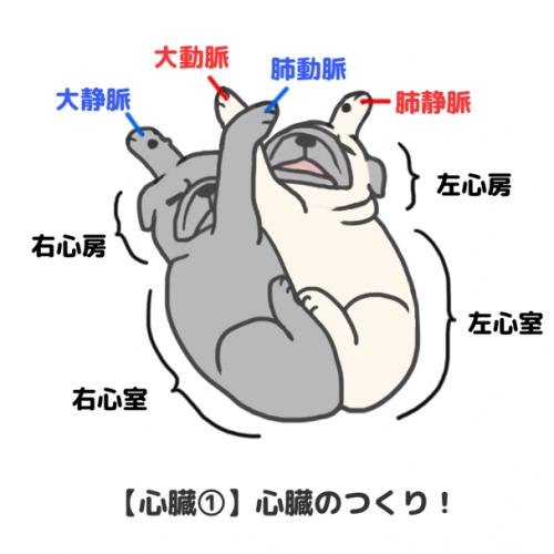 パグによる「心臓のつくり」解説図