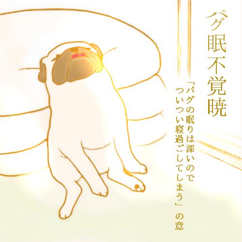パグ眠不覚暁