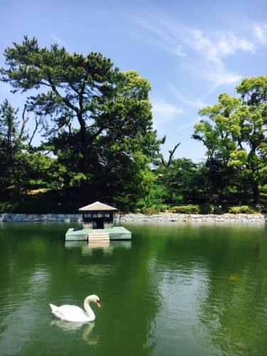 アヒルがいる池