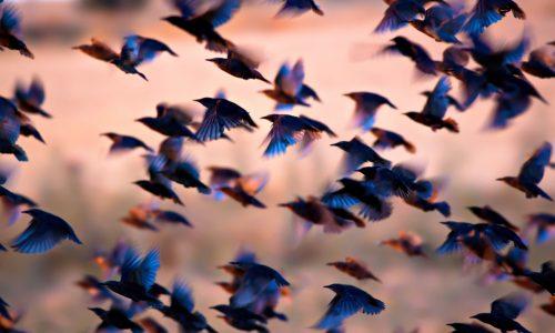 「啄木鳥」