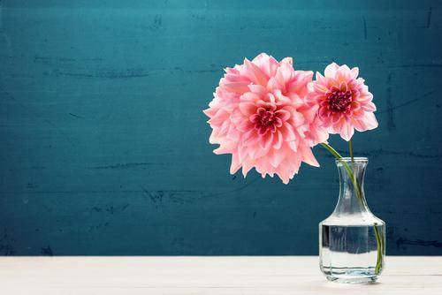 お花を長持ちさせる