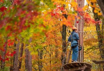 那須の森の空中アスレチックNOZARU【栃木県】