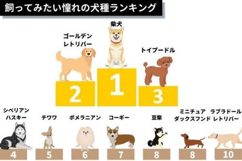 買ってみたい憧れの犬種ランキング