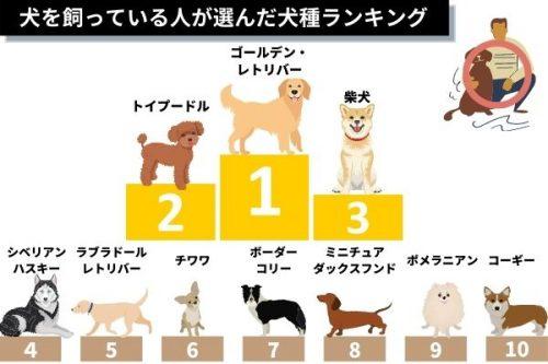 犬を飼っている人が選ぶ憧れの犬種ランキング