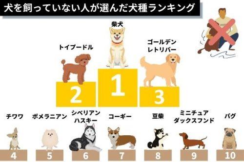 犬を飼っていない人が選ぶ憧れの犬種ランキング